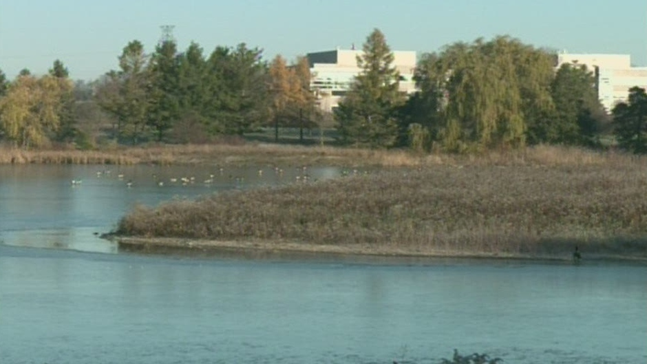 A Canada goose was shot and killed on Columbia Lake in Waterloo, Ont. as seen on Thursday, Nov. 8, 2012.