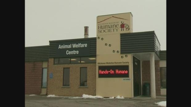 Dog adoptions temporarily halted at Humane Society