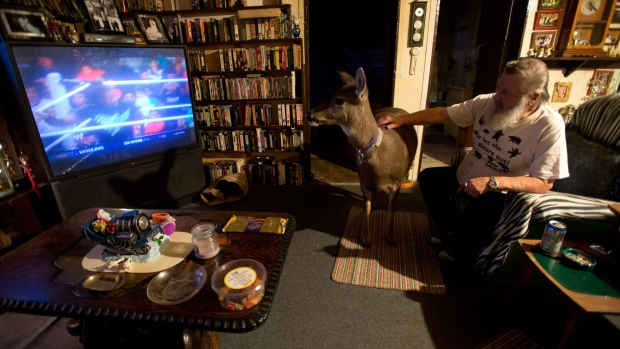 B.C. woman allowed to keep pet deer