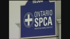 Grey and Bruce counties losing OSPCA