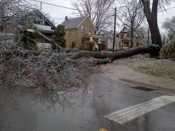 A large fallen tree is seen at the corner of Duke and Wilhelm streets in Kitchener, Ont., on Friday, April 12, 2013. (Jim Voteary / MYNEWS.CTVNEWS.CA)