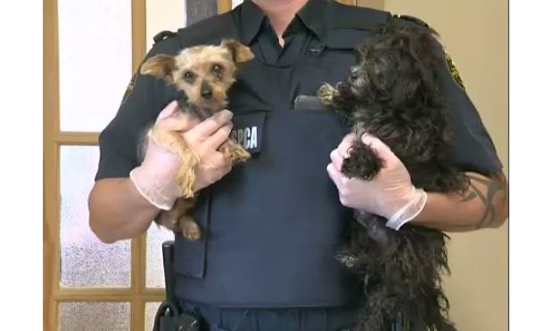 An anonymous tip sent Brant County SPCA inspectors to a property where they recovered 12 dogs.