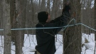 CTV Barrie: Where's the sap?