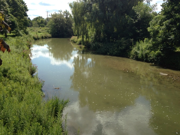 Canagagigue Creek, which runs through the Chemtura property in Elmira and ultimately the Grand River, is shown on Friday, Aug. 7, 2015. (Abigail Bimman / CTV Kitchener)