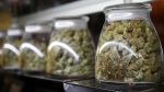 This Friday, Dec. 18, 2015, photograph, shows the logo on the front of jars of marijuana buds marketed by rapper Snopp Dogg in one of the LivWell marijuana chain's outlets south of downtown Denver. (AP / David Zalubowski)