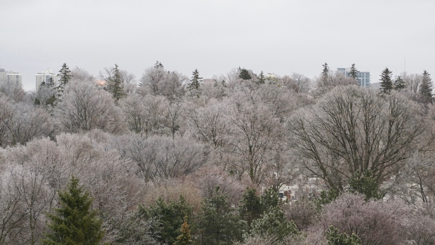 Trees covered in ice following freezing rain