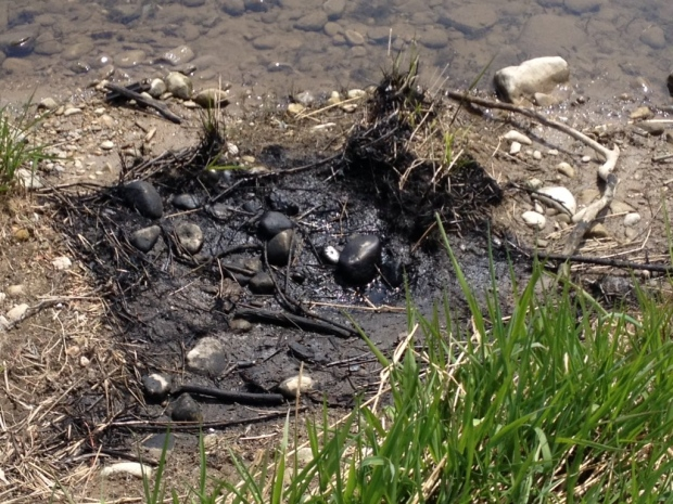 Petroleum released through the sewer system into the Grand River (CTV KItchener/ Nadia Matos)
