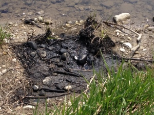 Spilled oil is seen along the shore of the Grand River in Kitchener on Saturday, April 30, 2016. (Nadia Matos / CTV Kitchener)