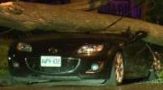 Tree falls, smashing car on Lydia Street in Kitchener