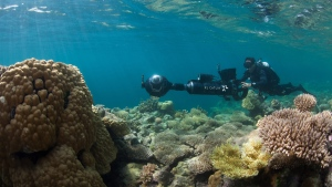 In this August 2015 photo, a diver with the XL Catlin Seaview Survey photographs coral reefs in Hawaii. (XL Catlin Seaview Survey via AP)