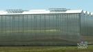 CTV Windsor: Greenhouse future