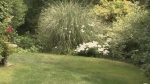 CTV Kitchener: Wintering your lawn