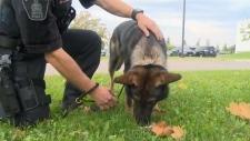 Police dog Grim