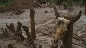 A cow skull is seen wired to a fence post in front of a hamlet destroyed by a mudslide triggered by the Nov. 5, 2015 failing of a dam holding back a giant pond of mine waste, in Paracatu, Brazil on Oct. 13, 2016. (AP / Leo Correa)