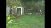 CTV Kitchener: Dog owner in court