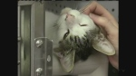 CTV Kitchener: New rules for animals?