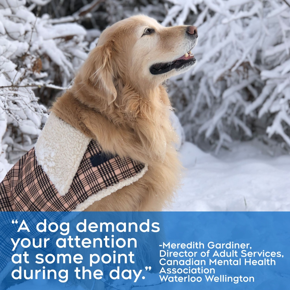 CMHA quote on dogs